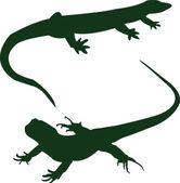 Two lizard — Stock Vector