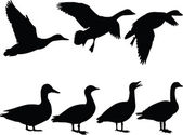 Wild duck silhouette collection — Stock Vector