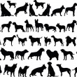 Big collection of dogs - Stock Vector
