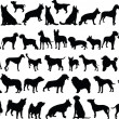Big collection of dogs — Stock Vector