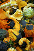 Gourds — Stock Photo