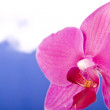 Orchid — Stock Photo #2155968