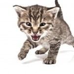 Cat — Stock Photo #2186894
