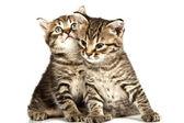 Kedi — Stok fotoğraf