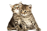 Kot — Zdjęcie stockowe