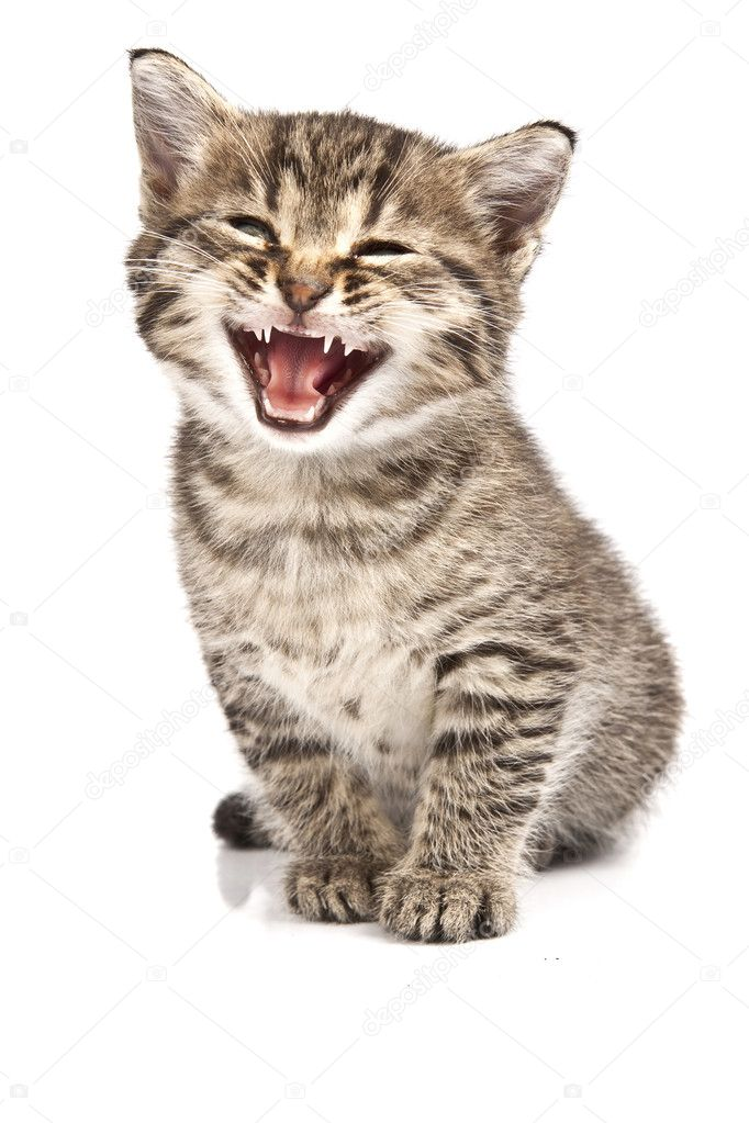 Little cat in the white bakcground — Stock Photo #2186486