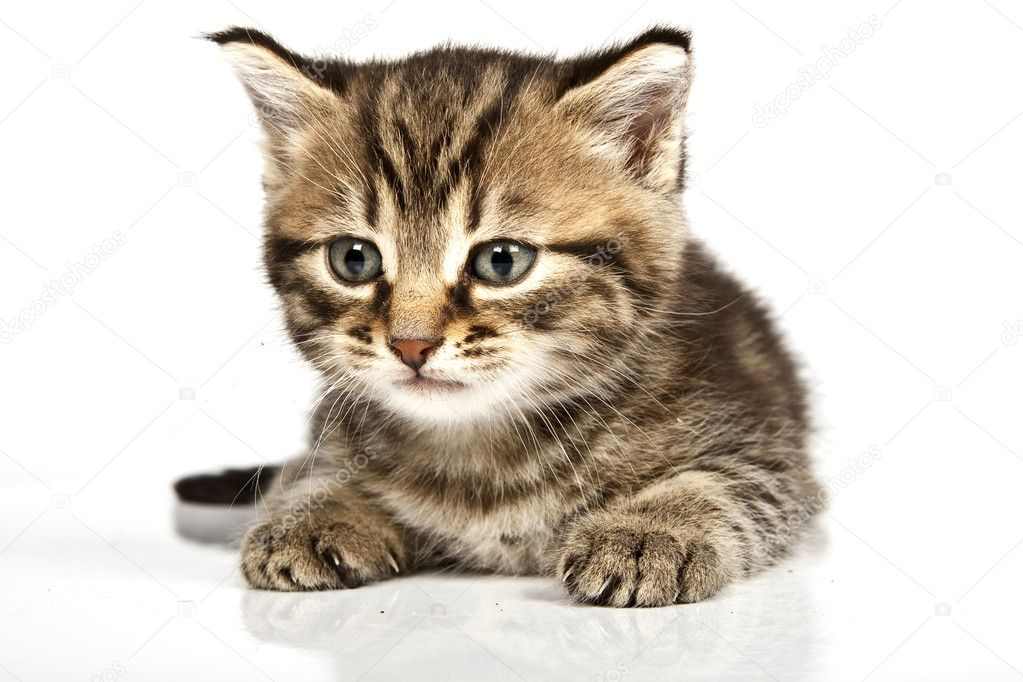 Little cat in the white bakcground — Stock Photo #2299392