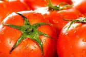 完璧な赤いウェット トマト — ストック写真