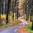 Country road in autumn - Stock Photo