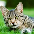 Cat in garden — Stock Photo #2438878