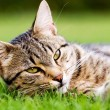 Cat in garden — Stock Photo #2438880