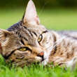 Cat in garden — Stock Photo