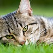 Cat in garden — Stockfoto