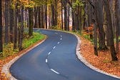 Country road in autumn — Stock fotografie