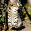 Cat in outdoor — Foto de Stock