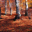 Forest in autumn — Foto Stock