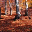 Forest in autumn — Lizenzfreies Foto
