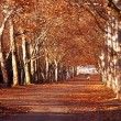 Park in autumn — Stock Photo
