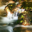 Autumn leaves in a creek — Stock Photo
