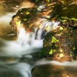 Autumn leaves in a creek — Stock Photo #2448491