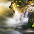 Autumn leaves in a creek — Stock Photo #2448517