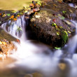 Autumn leaves in a creek — Stockfoto