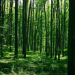 Green forest — Stockfoto #2449084