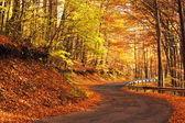 Country road in autumn — Stok fotoğraf