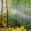 Lights of the autumn forest — Stockfoto