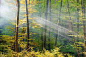 Lights of the autumn forest — Stock Photo
