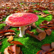 Red flyagaric in autumn forest — Stock Photo #2199902