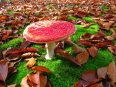 Red flyagaric in the autumn forest — Stock Photo