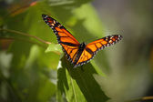 Butterly on a tree — Foto Stock