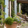 Plant pot outside a Tuscan farmhouse — Stockfoto