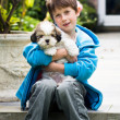 Stock Photo: Young boy holding lhasapso puppy
