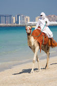 Camel on Jumeirah Beach, Dubai — Stock Photo