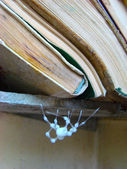 Spider and books — Stock Photo