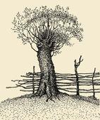 Old tree near the fence — Stock Photo