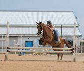 спортивная(ый) подросток конный спорт, прыжки на лошади — Стоковое фото
