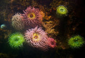 Colorful Soft Coral — Stock Photo