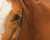 Horse eye with bridle — Stock Photo