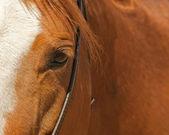 Horse eye with bridle — Stock Photo
