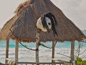 Mexico beach scene. — Stock Photo