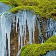 Icicles in Moss — Stock Photo