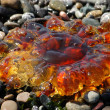 Amber colored jellyfish — Stock Photo