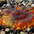 Amber colored jellyfish - Stock Photo