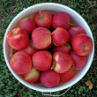 Bucket full of apples - Stock Photo