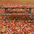 Fall camouflage — Stock Photo