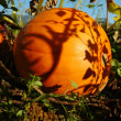 Pumpkin with shadows — Stock Photo