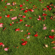 Red leaves on green — Stock Photo